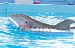 Dolphin Tale Movie Stills