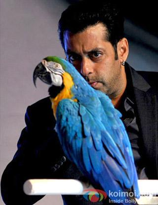 Salman Khan in Bigg Boss Season 6