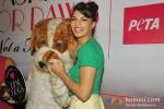 Jacqueline Fernandez unveils PETA campaign at LFW 2013 Pic 1