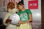 Jacqueline Fernandez unveils PETA campaign at LFW 2013 Pic 2