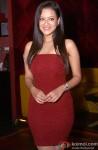 Madalasa Sharma during the press conference of film 'Samrat & Co.' in New Delhi Pic 1