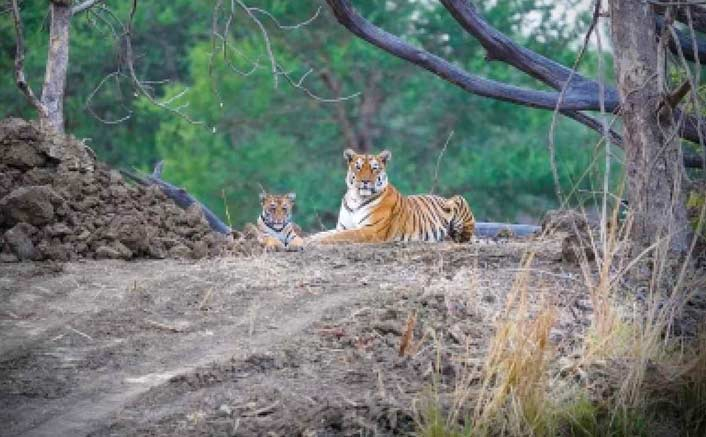 Raveena Tandon's wildlife photography to be exhibited