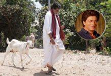 Big B 'walks' goat after Twitter banter with SRK