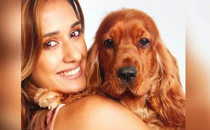 """""""In Mumbai, I Don't Have Space To Keep Pigeons & Cows"""": Disha Patani"""