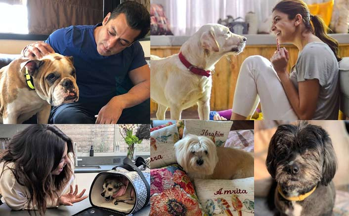 Bollywood Celebrities & Their Pooch N Paws!