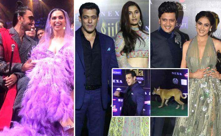 IIFA 2019 Moments: Dog Chasing Salman Khan, Ranveer Singh-Deepika Padukone's Passionate Kiss & More!