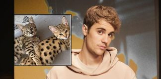 PETA slammed newly married Justin Bieber for buying exotic cats for $35K
