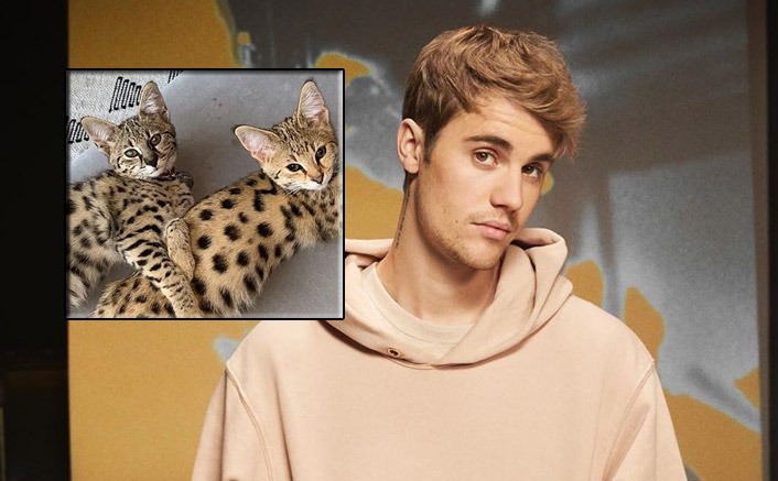 PETA SLAMS Singer Justin Bieber For Buying Exotic Cats Worth $35K