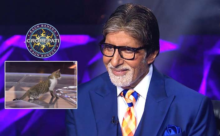 Kaun Banega Crorepati 11: Cat Lazes On The Sets, Amitabh Bachchan Shares A Hilaroous Reaction To It