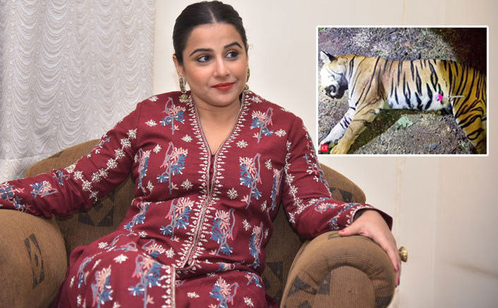 Vidya Balan To Now Play A Forest Officer; Film To Revolve Around The Controversial Killing Of Tigress Avni