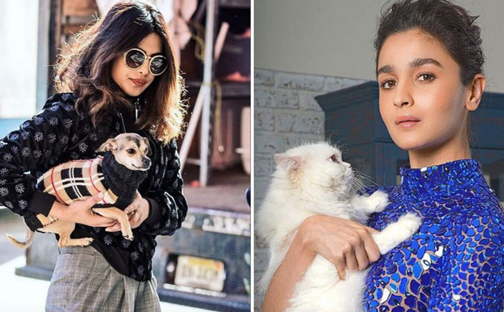 From Alia Bhatt's Edward Bhatt To Priyanka Chopra Jonas' Diana Chopra, These Bollywood Pets Are The Real Instagram Celebs