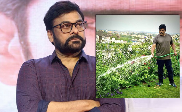 Megastar Chiranjeevi Makes Best Use Of Lockdown Amidst Nature By Watering Plants At Terrace Garden