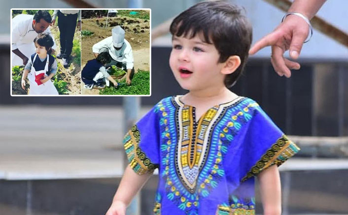 Taimur Ali Khan picks organic veggies at a farm