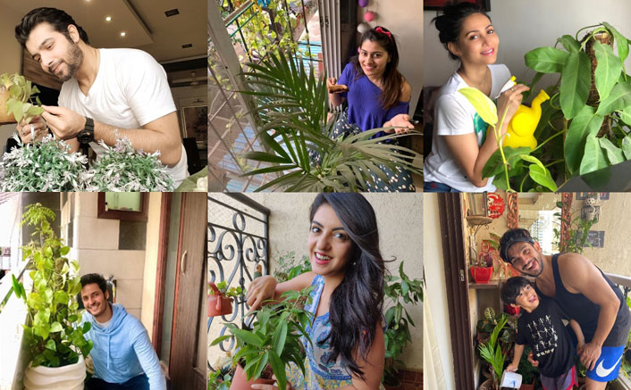 Watering plants is helping these actors de-stress