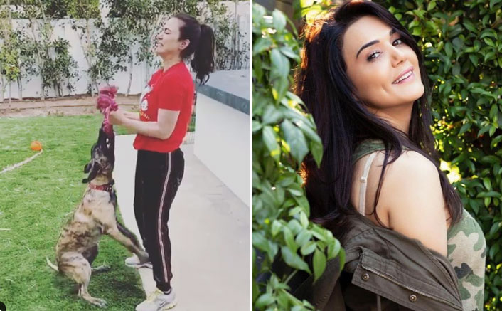 Preity Zinta uses pet pup Bruno as weight in funny workout video