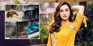 Shraddha Kapoor Creates Awareness About Animal WellBeing In These Tough Times & We Respect The Stree Even More