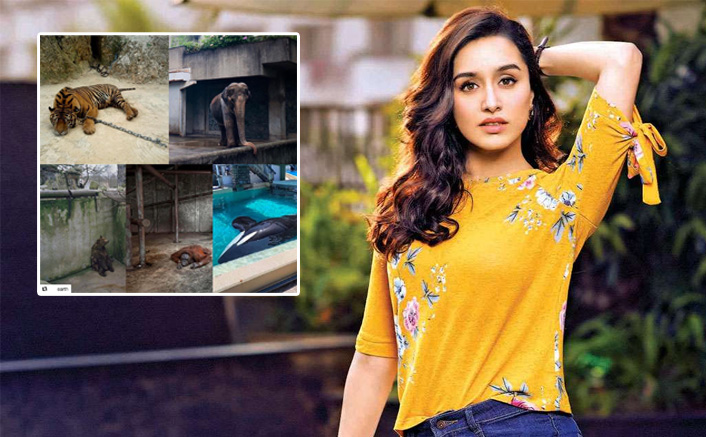 Shraddha Kapoor Creates Awareness About Animal Well-Being In These Tough Times & We Respect The 'Stree' Even More