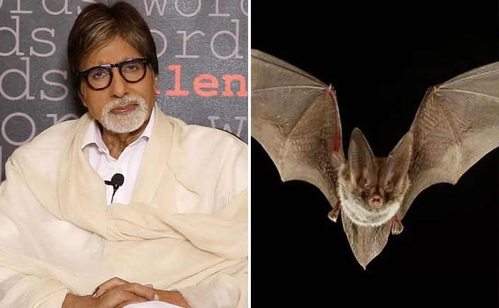 Amitabh Bachchan Shares 'Breaking News' Of A Bat Entering His House, Gets Slammed