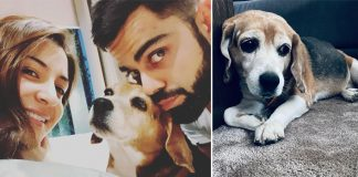 Anushka Sharma & Virat Kohli's Pet Friend Bruno Passes Away, The Couple Mourns His Death