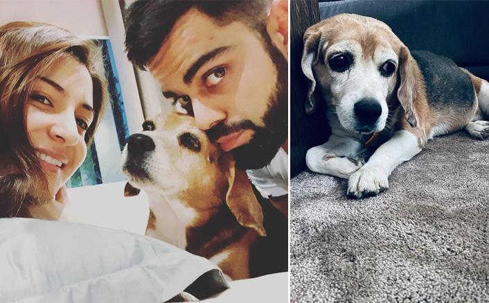 Anushka Sharma & Virat Kohli's Pet Bruno Passes Away; Couple Mourns His Death