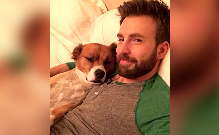 Chris Evans Goofs Up Big Time While Grooming His Dog & We Are Feeling Sorry For The Pooch