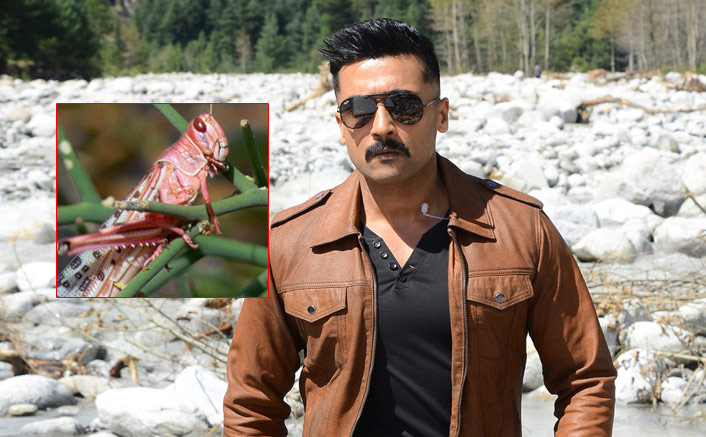 Suriya's Kaappaan Becomes Hottest Topic Of Discussion Among Netizens Following Locust Attack In Various Parts Of India