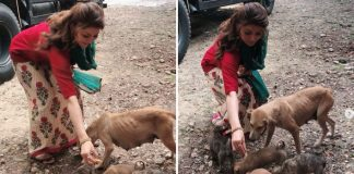 Urvashi Rautela urges people not to neglect stray animals
