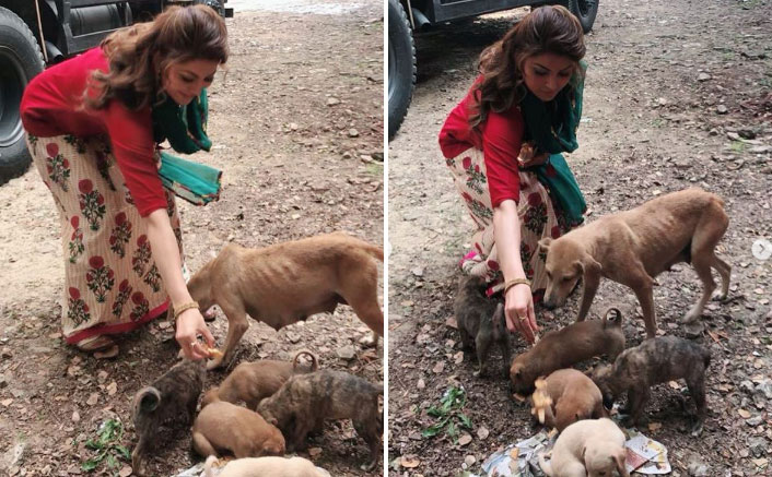 Urvashi Rautela Requests Animal Lovers To Take Care Of Dogs Who Are Starving To Death Amid Pandemic