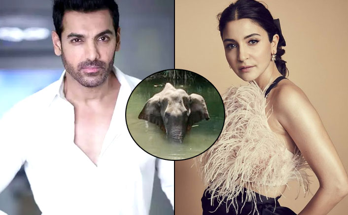 From Anushka Sharma To John Abraham, Bollywood Celebs Express Their Anger Over Brutal Killing Of A Pregnant Elephant In Kerala