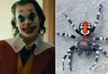 After Joaquin Phoenix's Joker Avatar Inspires Scientists To Name New Spider Specie, Here's How Twitterati Reacted