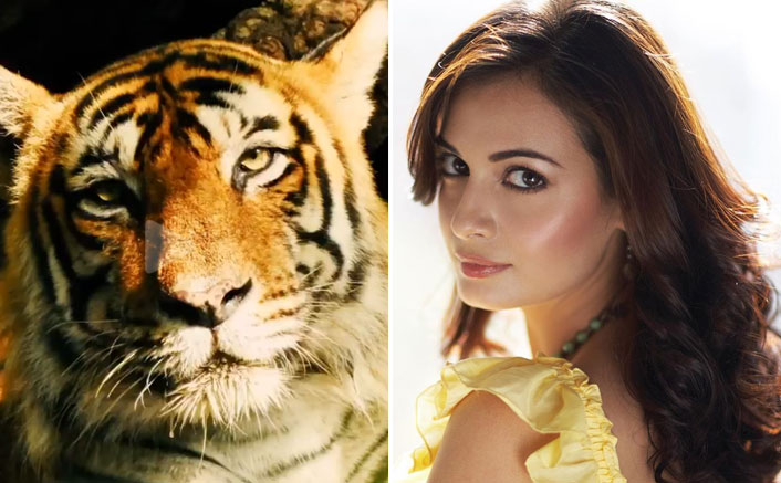 "Dia Mirza On Tiger Conservation: ""Economic Benefits Of Reserves Are Unimaginable"""