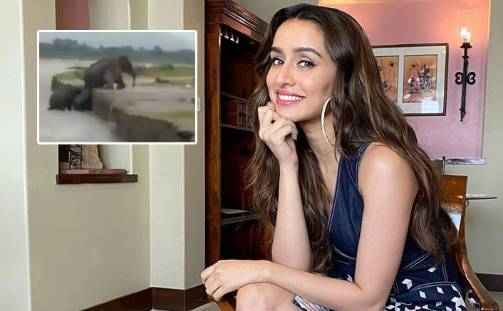 Shraddha Kapoor Spreads Awareness By Sharing A Video Of An Elephant Helping A Calf!