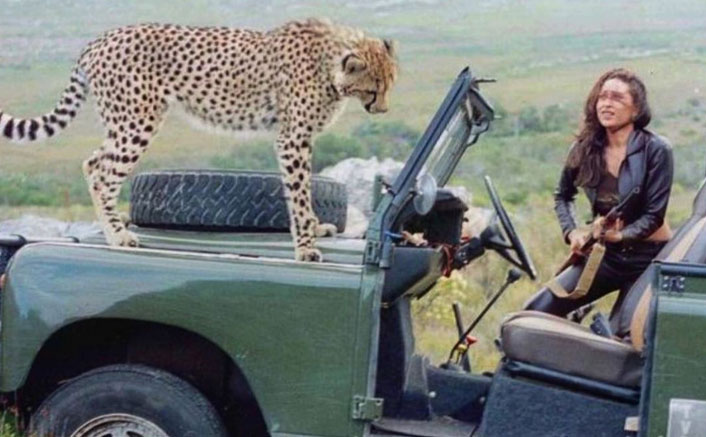 Karisma Kapoor Shares A Same Frame With A Cheetah & Asks Fans To Guess The Film