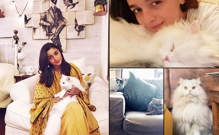 Alia Bhatt Is An Adorable Cat Mommy & Her Instagram Page Is A Heaven For All Feline Lovers - Celebrity Pals!