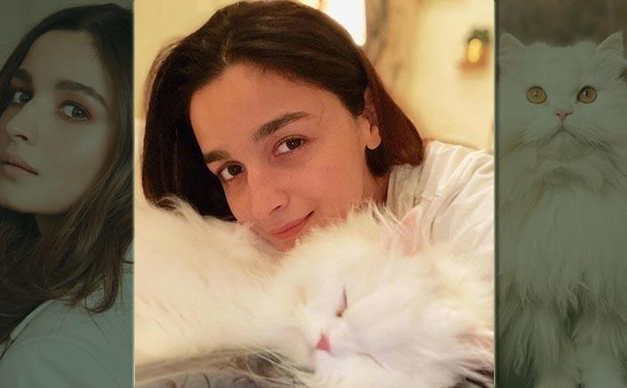 Alia Bhatt Turns Photographer When Her Cat Edward Falls Asleep & Shares This Cute Click