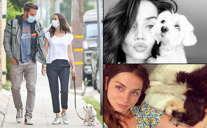 Ana de Armas' Dogs Are Cute As Button; Ben Affleck Loves Them Too - Celebrity Pals