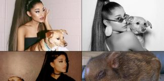 Ariana Grande Lives A Heavenly Life With 9 Cute Dogs & One Tiny Piglets - Celebrity Pals