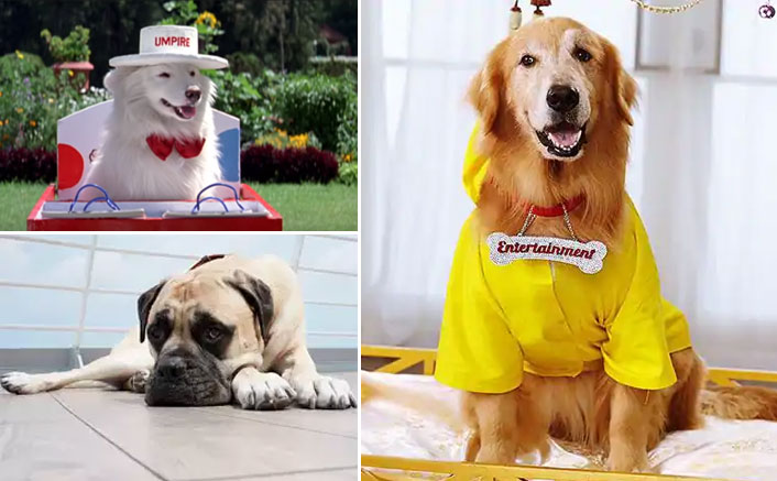International Dog Day: From Tuffy To Entertainment & Pluto, These 'Filmy' Doggies Played An Important Role In The Narrative
