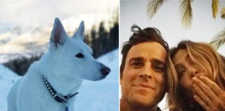Jennifer Aniston & Ex-Husband Justin Theroux's Pet Dog Dolly Played An Integral Part In Their Lives - Celebrity Pals!