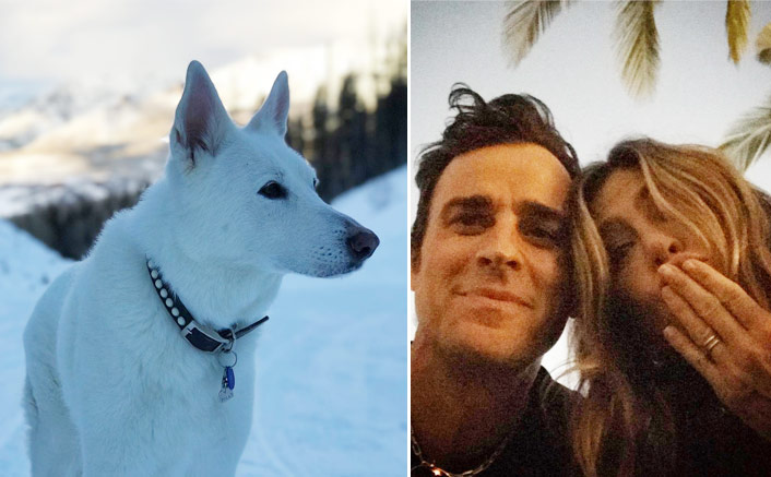 Jennifer Aniston & Ex-Husband Justin Theroux's Pet Dog Dolly Played An Integral Part In Their Lives - Celebrity Pals!(Pic credit: Instagram/justintheroux)