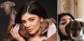Kylie Jenner Has 8 Doggos & An EXCLUSIVE Dog Mansion For Them; Everything You Need To Know! - Celebrity Pals