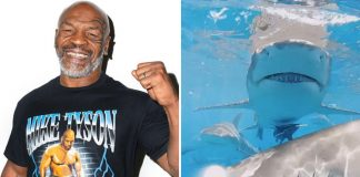 Mike Tyson Knocks A Shark To Sleep In Discovery Channel's Tyson VS. Jaws: Rumble On The Reef