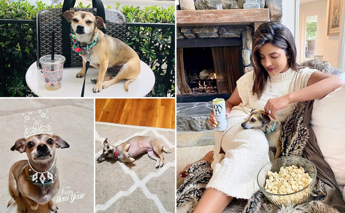 Priyanka Chopra's Pet Diana Is An Instagram Princess & Here's All You Need To Know About The Cute Pup - CELEBRITY PALS!(Pic credit: Instagram/diariesofdiana)
