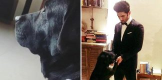 """Sushant Singh Rajput's Niece Shares An Endearing Update On Pet Dog Fudge: """"He Does Still Look Up..."""""""