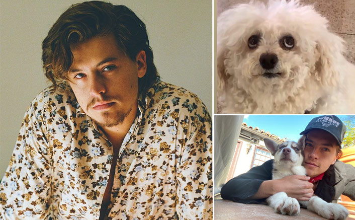 Riverdale Actor Cole Sprouse Befriends Dogs, Cows & Wants A Pet Frog - Celebrity Pals!(Pic credit: Instagram/colesprouse)