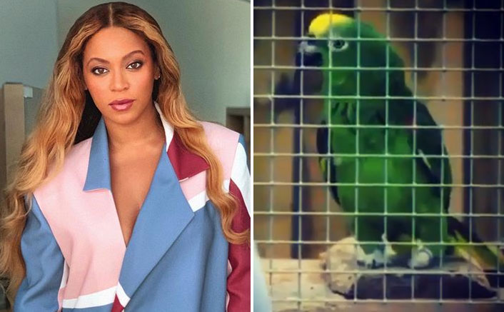 Singing Parrot Who Entertains People With Beyonce's Songs At Wildlife Park Goes Viral, Watch Video!