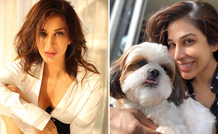Sophie Choudry EXCLUSIVE! Actress' Bond With Pet Dog Tia Proves What Unconditional Love Is About - Celebrity Pals