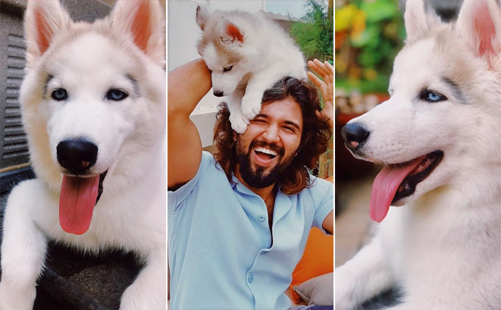 Vijay Deverakonda & His Pet Dog Storm Remind Us Of Game Of Thrones' Jon Snow & Ghost - Celebrity Pals
