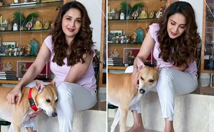 World Animal Day: Madhuri Dixit Nene Has An Important Message To Her Fans