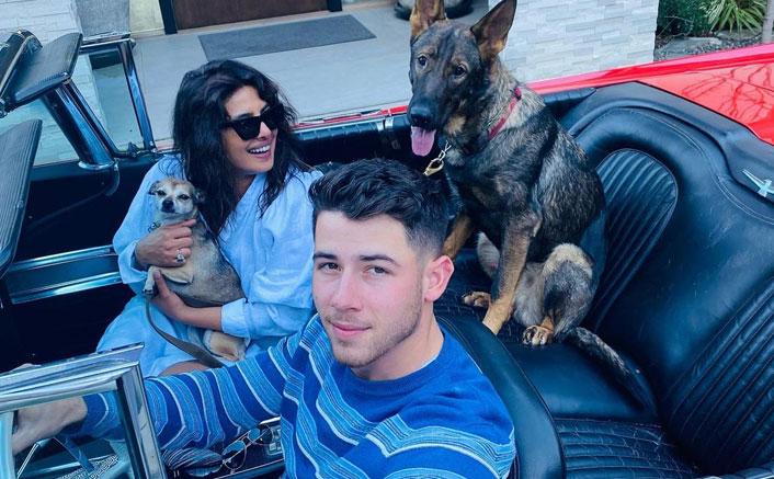 Priyanka Chopra Unites With Hubby Nick Jonas & Her Furry Family, See The Pawdorable PIC!